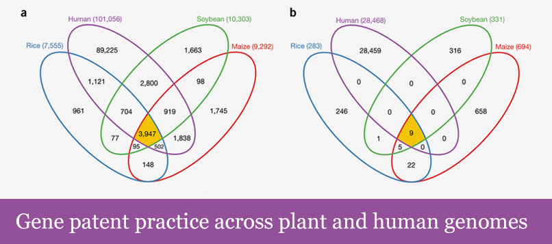 Gene patent practice across plant and human genomes